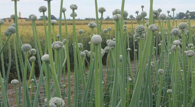 PREDLOGI ZA OKREPITEV  DEJAVNOSTI SEMENARSKEGA CENTRA  PTUJ za zagotavljanje samooskrbe  s semeni in hrane v času spremenjenih podnebnih,  gospodarskih in posledic COVID-19